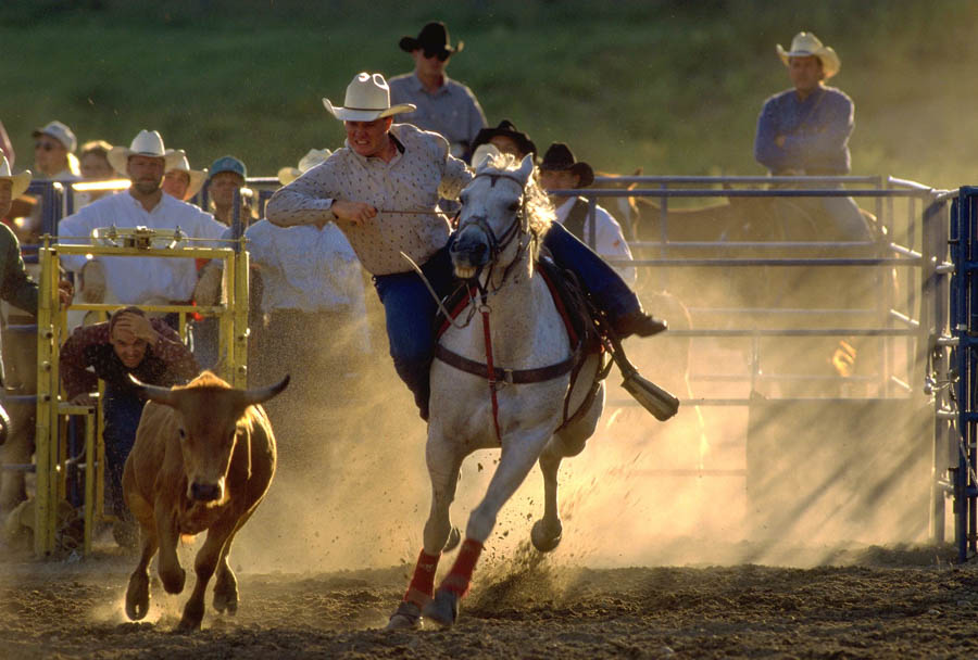 Cowboy roping a steer on horseback