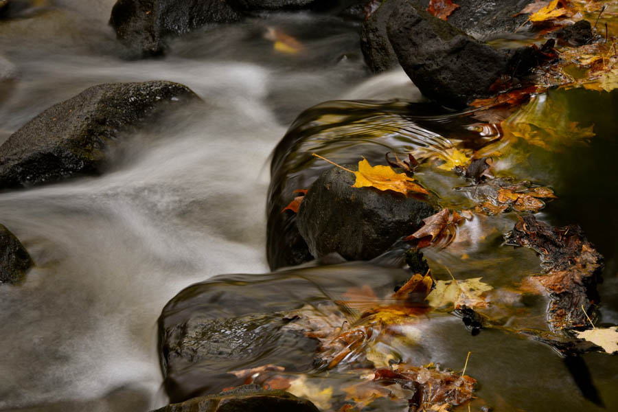 rocks and leaves in a stream