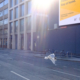Empty city street with gull flying